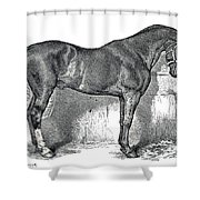 Antique Horse Drawing Shower Curtain