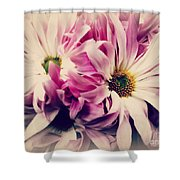 Antique Pink And White Daisies Shower Curtain