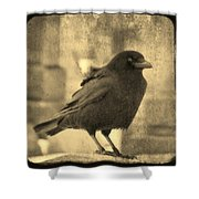 Antique Sepia Crow Shower Curtain