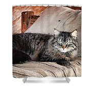 Antiquity Kitty Shower Curtain