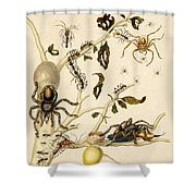 Ants Spiders Tarantula And Hummingbird Shower Curtain by Getty Research Institute