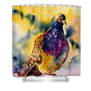 Anytime Anywhere Shower Curtain