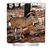 Aoudad Plus 2 Shower Curtain