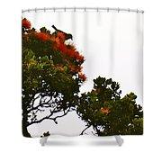 Apapane Atop An Orange Ohia Lehua Tree  Shower Curtain