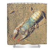 Appalachian Blue Crayfish Shower Curtain