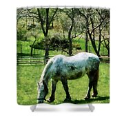 Appaloosa In Pasture Shower Curtain