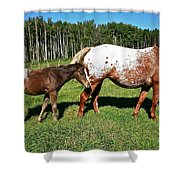 Appaloosa Mamma And Baby Shower Curtain