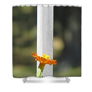 Appeal To Birds Shower Curtain