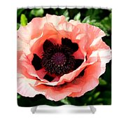 Appealing Pink Poppy Shower Curtain