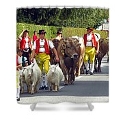 Appenzell Parade Of Cows Shower Curtain