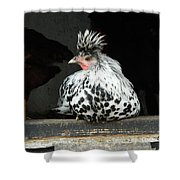 Appenzeller Just Hanging Out Shower Curtain