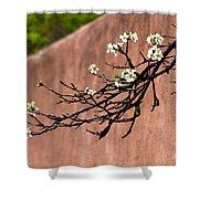 Apple Blossom Branch Shower Curtain