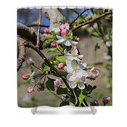 Apple Blossom Hill Shower Curtain