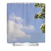 Apple Blossom In Spring Blue Sky Shower Curtain