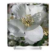 Apple Blossom Time Shower Curtain