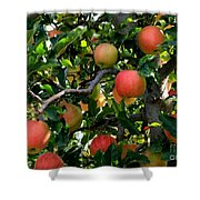 Apple Harvest - Digital Painting Shower Curtain