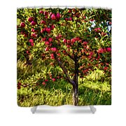 Apple Orchard II Shower Curtain