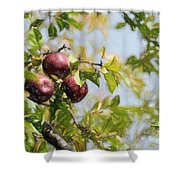 Apple Pickin' Time Shower Curtain