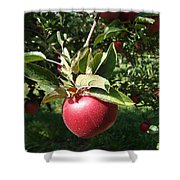 Apple Picking Shower Curtain