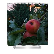 Apple Sunset Shower Curtain