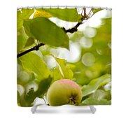 Apple Taste Of Summer 2 Shower Curtain