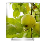 Apple Taste Of Summer 3 Shower Curtain