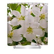 Apple Tree Blossoms Shower Curtain