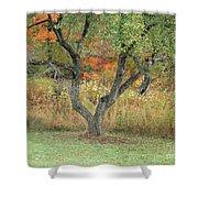 Apple Tree In Autumn Shower Curtain