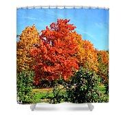 Apple Tree In September Shower Curtain