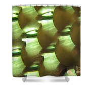 Apples Abstract 3 Shower Curtain
