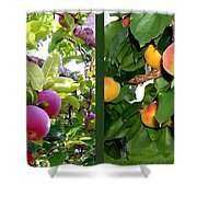 Apples And Apricots Shower Curtain by Will Borden