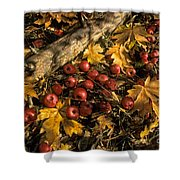 Apples In Fall Shower Curtain