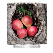 Apples In Tree Shower Curtain