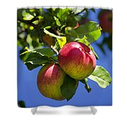 Apples On Tree Shower Curtain