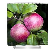 2 Apples On Tree Shower Curtain