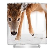 Approaching Shower Curtain