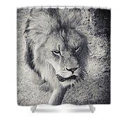Approaching Lion Shower Curtain