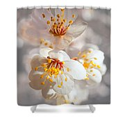 Apricot Blooms Shower Curtain