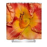 Apricot Daylily Close-up Shower Curtain