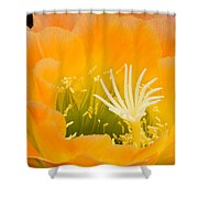 Apricot Glow Shower Curtain