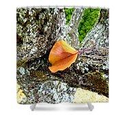 Apricot Leaf And Lichen Shower Curtain