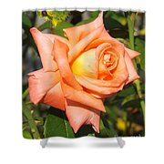 Apricot Nectar Rose Shower Curtain