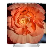 Apricot Pink Tuberous Begonia Shower Curtain