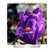 April Crocus' Shower Curtain