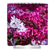April Showers Mean May Flowers Shower Curtain