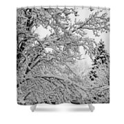 April Snow Bw Shower Curtain