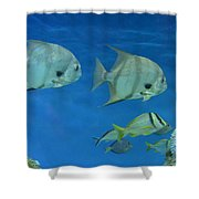 Aquatic Blues Shower Curtain