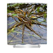 Aquatic Hunting Spider Shower Curtain