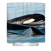 Aquatic Immersion Shower Curtain