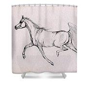 Arabian Horse  2014 02 25b Shower Curtain